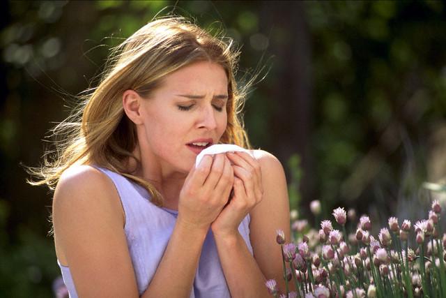 La primavera, esa época del año en la que se estornuda más de lo normal. ¡Vaya fastidio! Fuente: http://www.santanatura.com.pe/blog/alergia-vs-resfriado/