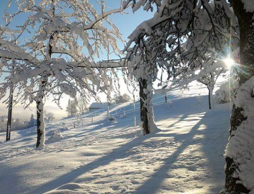 8 consejos para cuidar tu visión en invierno